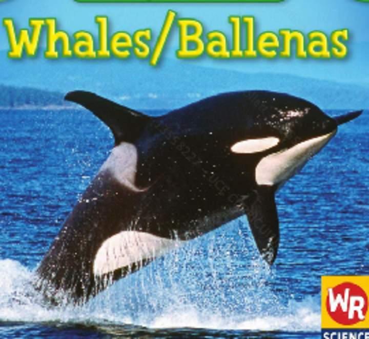 Ballenas Curriculum Nacional Mineduc Chile