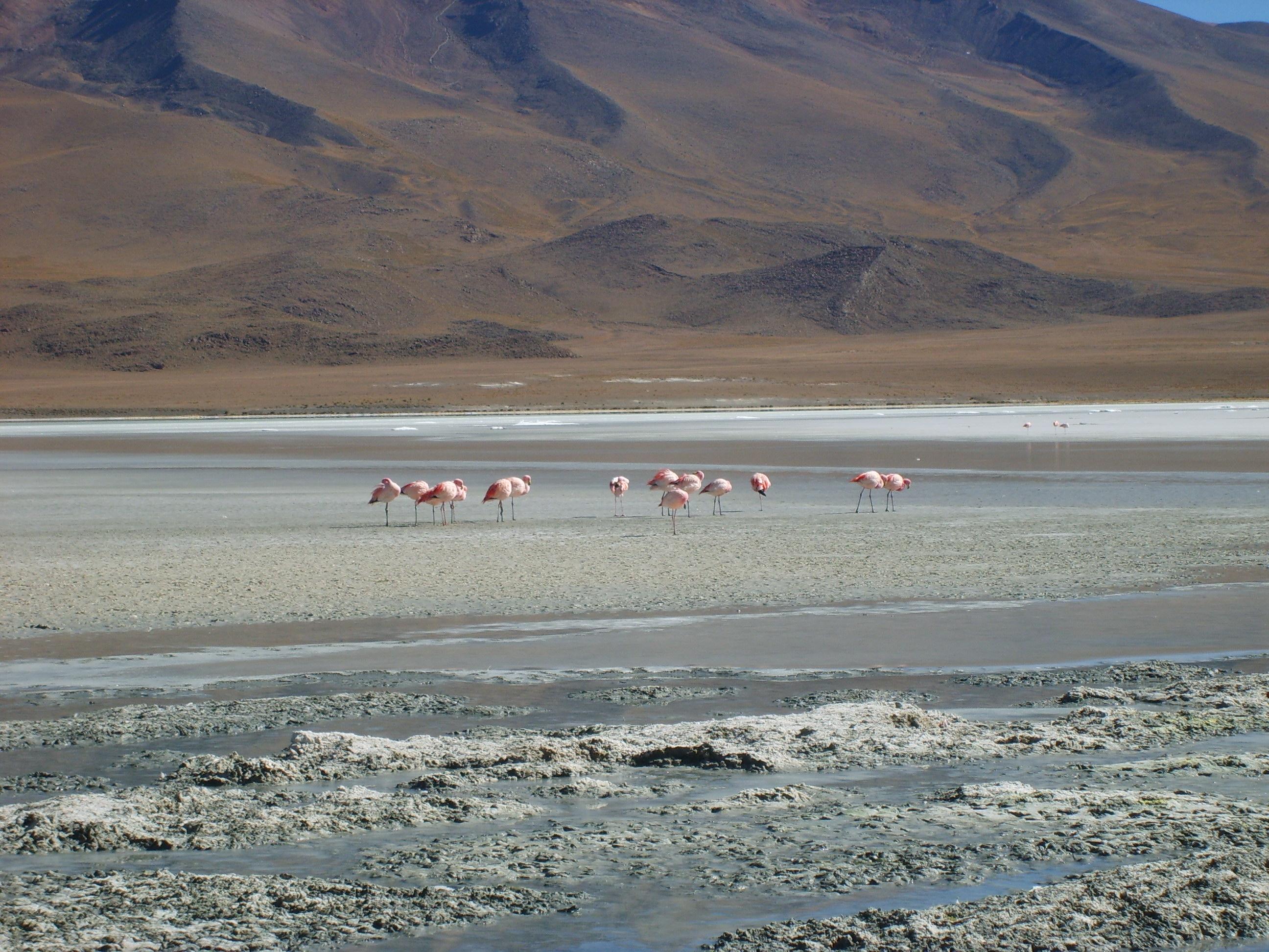Decoracion Zona Norte De Chile ~ HI02 OA 08  Curr?culum en l?nea MINEDUC Gobierno de Chile
