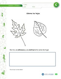 Actividades complementarias - Ciencias Naturales - Currículum en ...