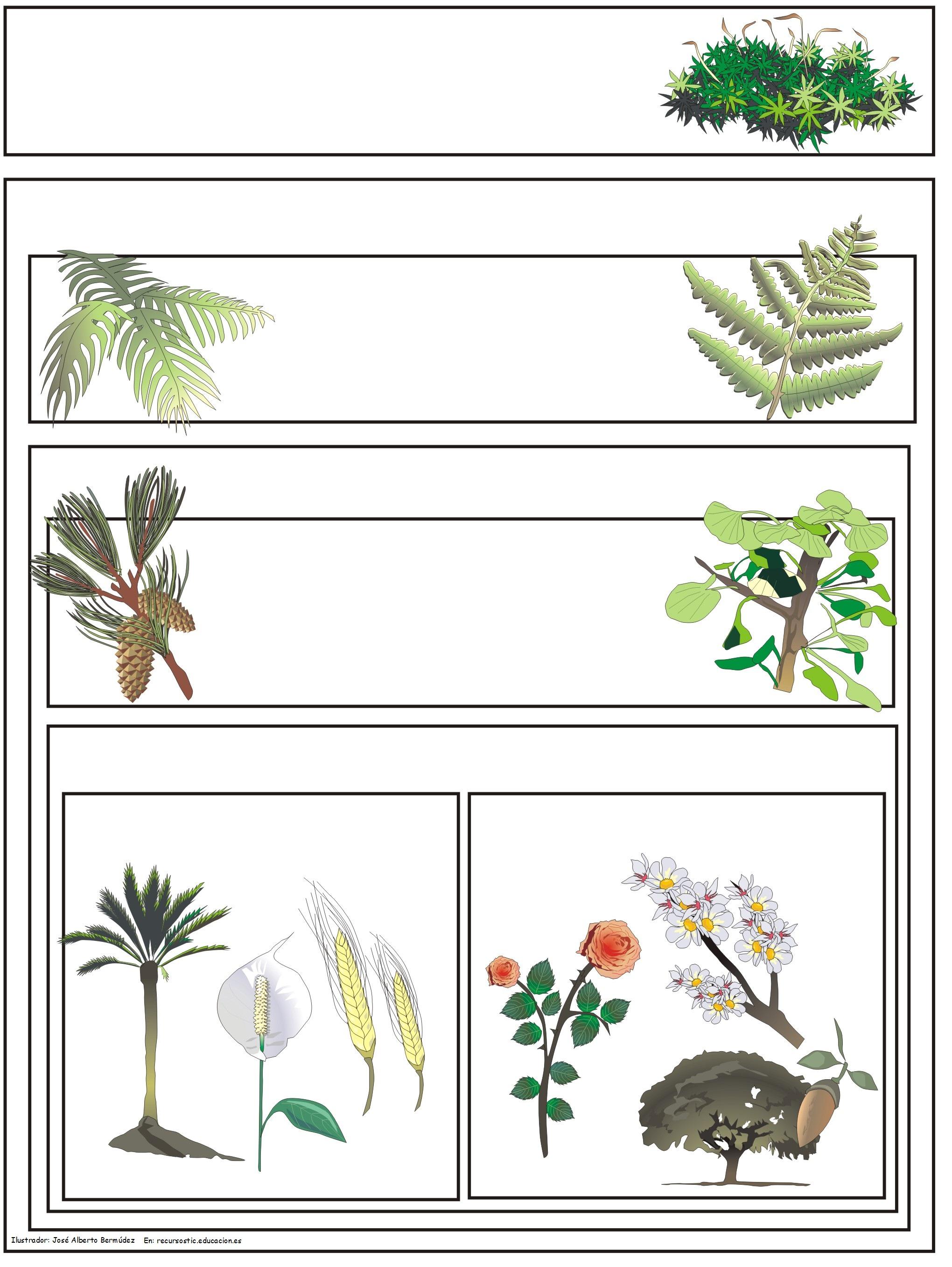 Clasificaci U00f3n De Plantas