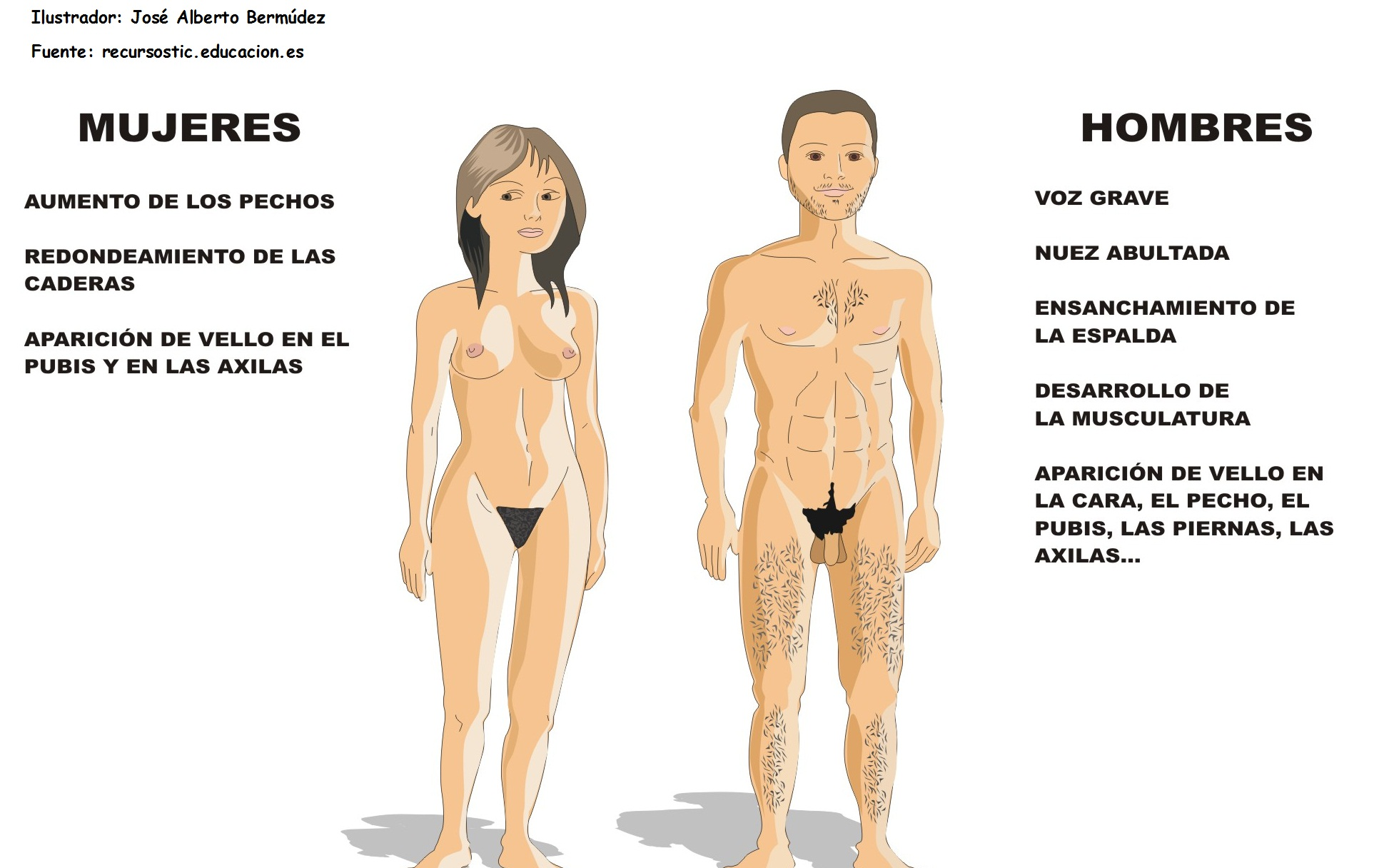 anatomia: Aparato reproductor humano masculino y femenino