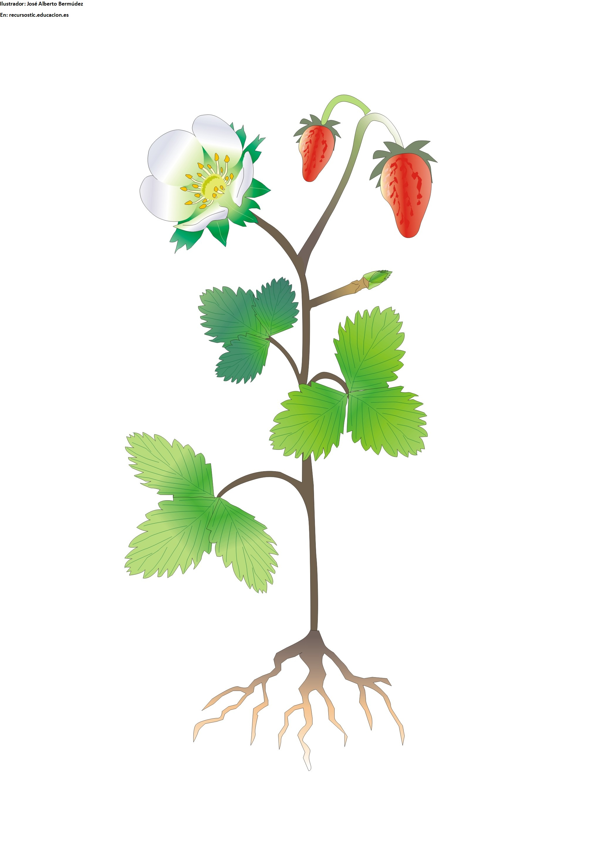 partes de una planta con flor sin rotular curriculum nacional