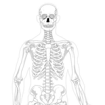 Esqueleto Humano Para Colorear Curriculum Nacional