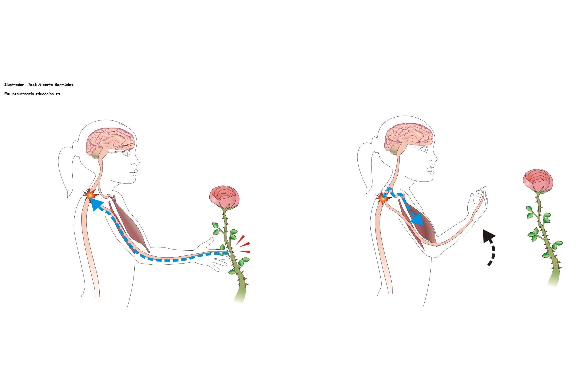 Imágenes de Amor con Movimiento - Frases Románticas de Amor