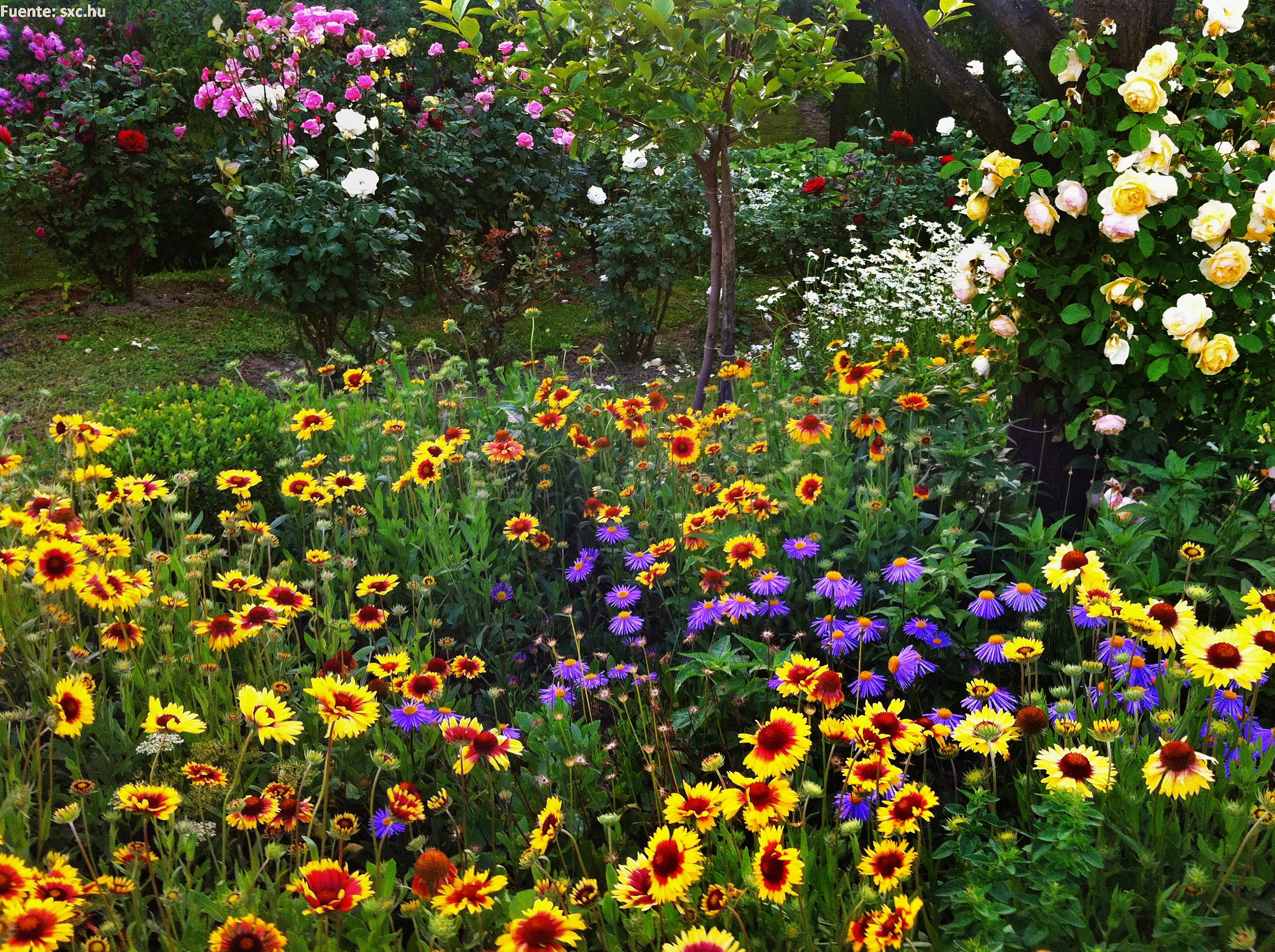 flores jardim primavera:Paisaje de primavera – Currículum en línea. MINEDUC. Gobierno de