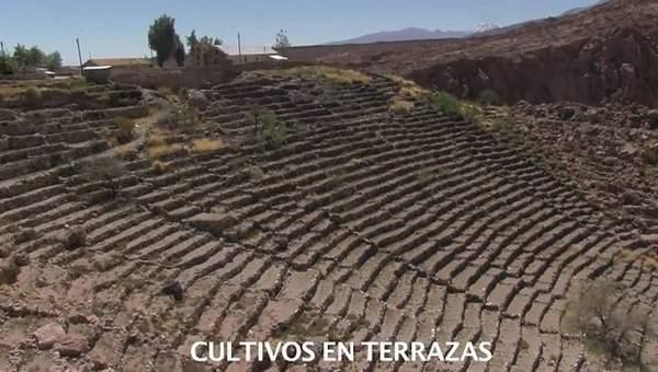 Cultivos En Las Terrazas De Caspana Curriculum Nacional
