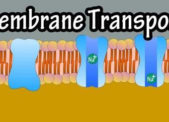 Cell Membrane Transport - Transport Across A Membrane ...